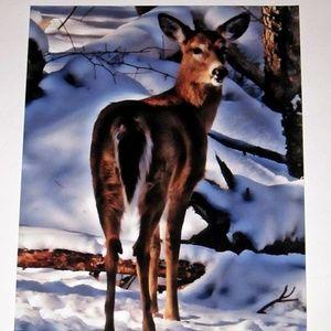 """8"""" x 10"""" Whitetail Deer Print"""